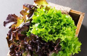 Bio-Vegane Salate