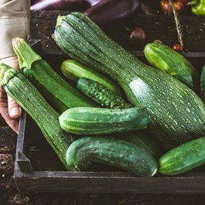 Bio-Veganer Zucchini der PfalzBio